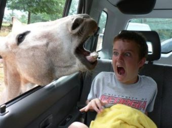 Videos Que Dan Risa – Animales Graciosos #TopVideo