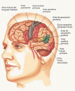 Diferencia entre Alzheimer y Demencia
