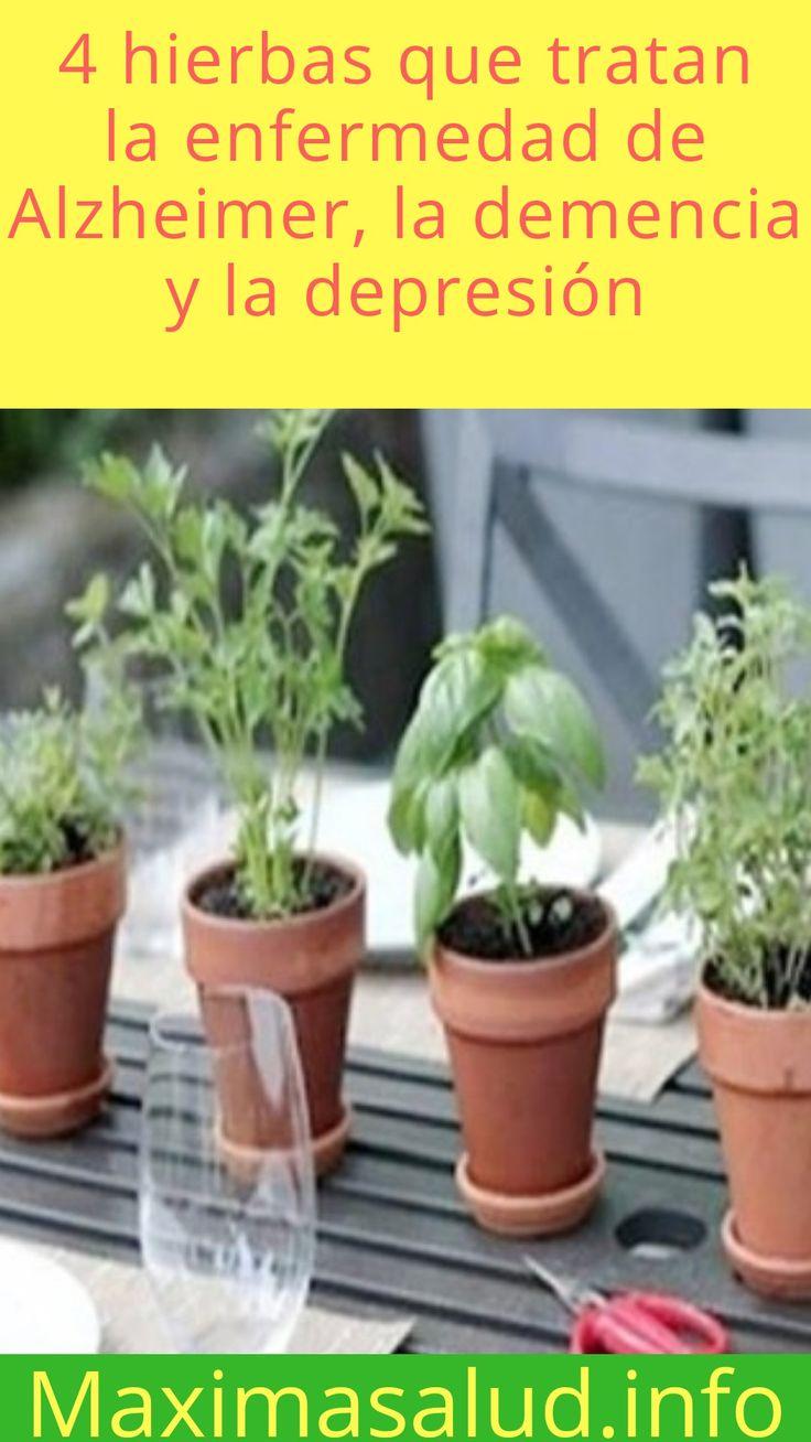 4 hierbas que tratan la enfermedad de Alzheimer, la demencia y la depresión #SALUD #ALZHEIMER #DEPRESIÓN