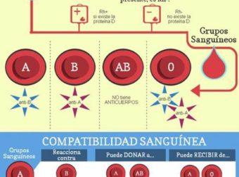 Los grupos sanguíneos. ¿Cuantos tipos de sangre existen? – #Infografia #Alzheimer #Demencias