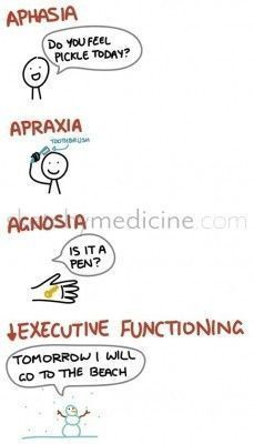 Aphasia, Apraxia, agnosia and decreased executive functioning defined