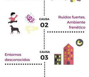 5 #causas #de #problemas #conductuales #en #demencias:  – #Infografia #Alzheimer #Demencias