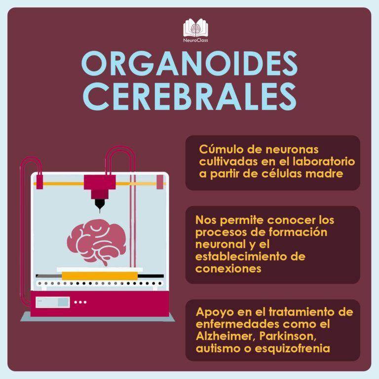Infografías - NeuroClass