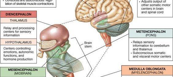 Brain – #Infografia #Alzheimer #Demencias