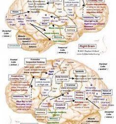 Visual Learning about Lewy Body Dementia – #Infografia #Alzheimer #Demencias