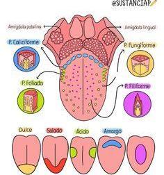 100 esquemas médicos – uDocz – #Infografia #Alzheimer #Demencias
