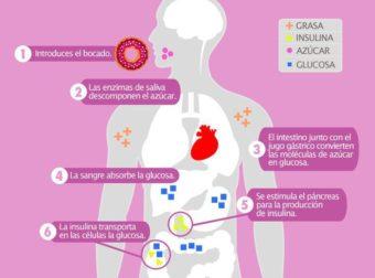 ¿Cómo se procesa el azúcar en el cuerpo? – #Infografia #Alzheimer #Demencias